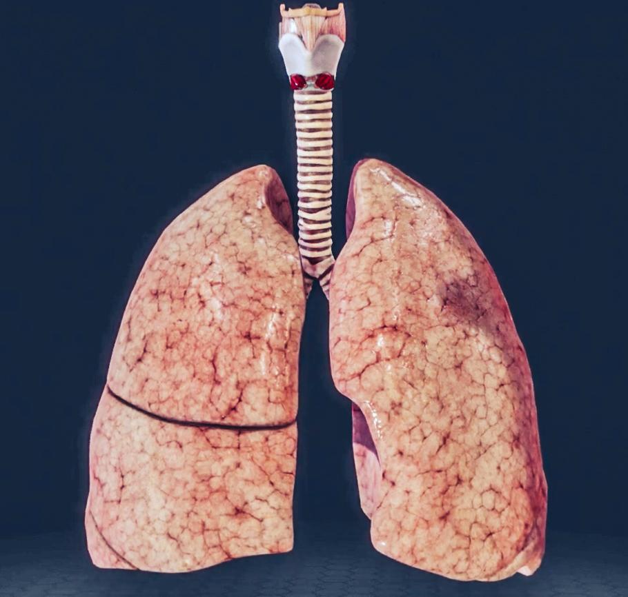 Visualisierung der Lung